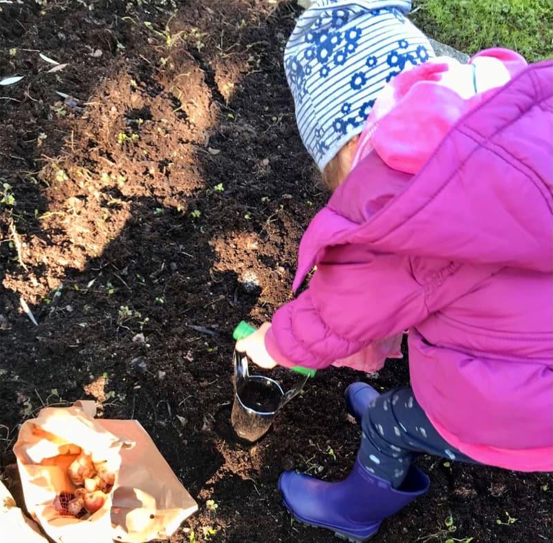 Bimba pianta i bulbi sotto l'ulivo